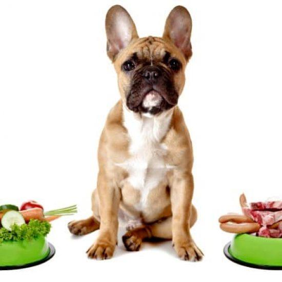 french_bulldog_vegetable_v_meat_diet_650_c